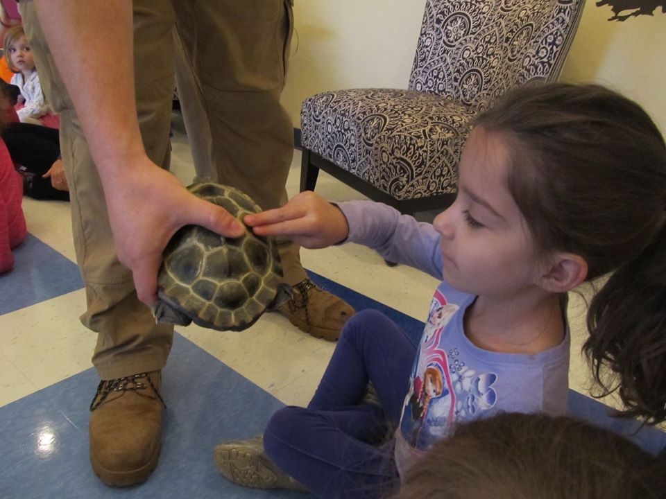 young little girl touching a turtle's back shell, at a Preschool & Daycare/Childcare Center serving Apex & Fuquay-Varina, NC