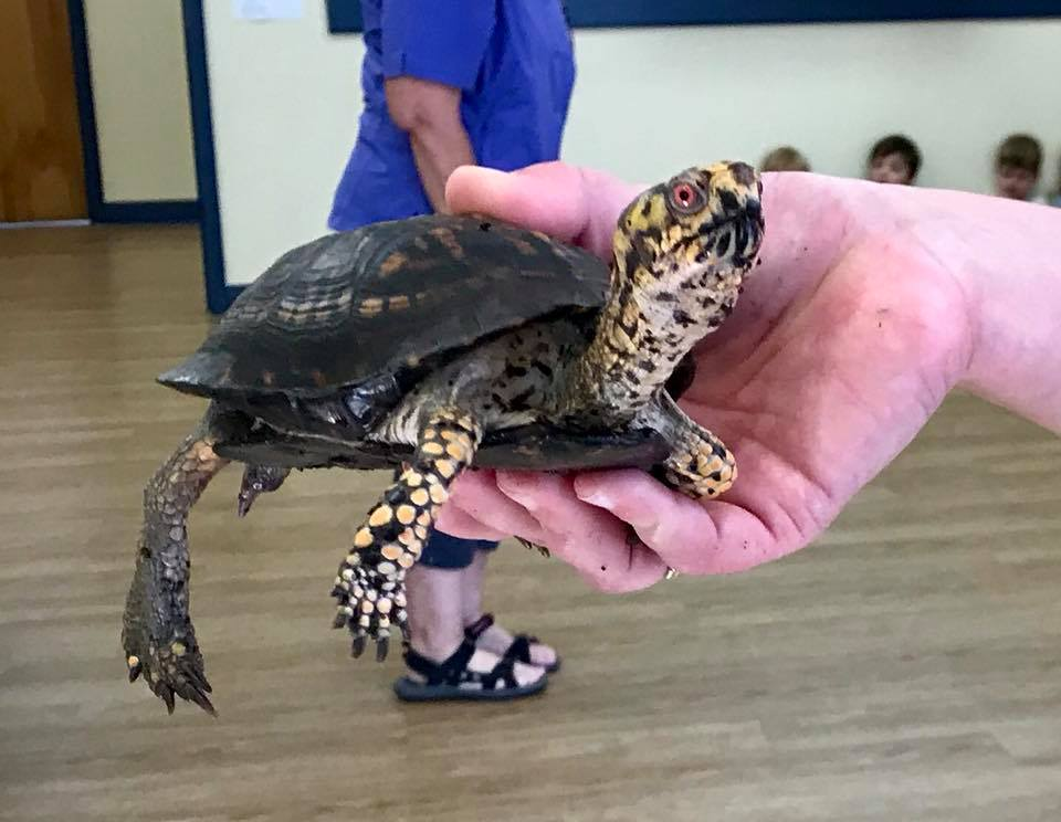 Teacher holding a small turtle at a Preschool & Daycare/Childcare Center serving Apex & Fuquay-Varina, NC