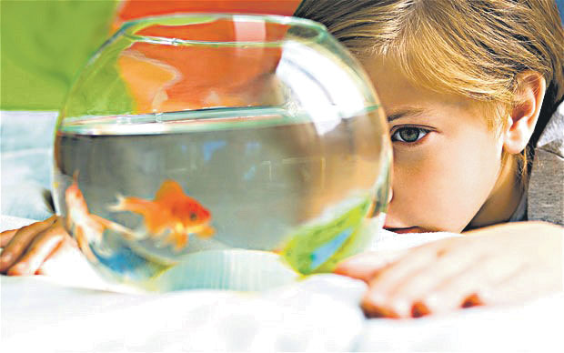 Cute young little preschool girl looking at at a goldfish in a fishbowl at a Preschool & Daycare/Childcare Center serving Apex & Fuquay-Varina, NC